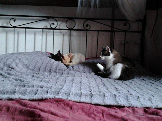 Agriturismo Bavè: Riposo Felino al Bavè