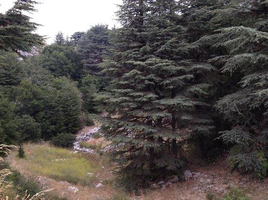 Al-Shouf Cedar Nature Reserve: barouk