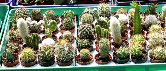 Cafe Itamar Plant Nursery