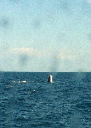 Brisbane Whale Watching: Spy Hop - taken from below deck