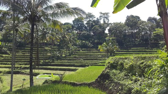 Ijen Resort & Villas : View from the hotel grounds