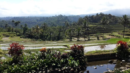 Ijen Resort & Villas : View in the direction of the Ijen vulcano
