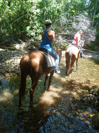 Cape Tribulation Horse Rides: experienced ride through the forest and creeks