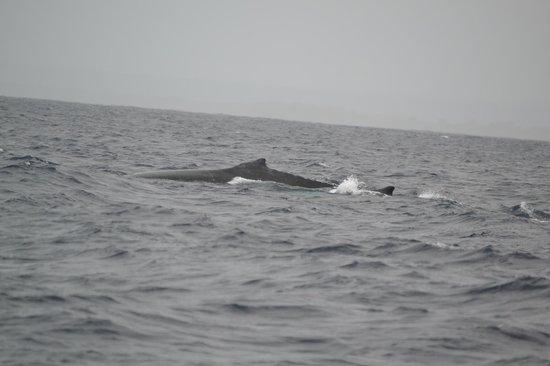 Hemingways Watamu: Whales