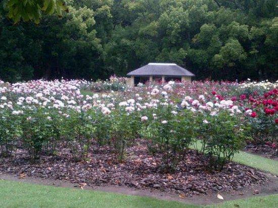 Vergelegen Estate: View of the rose garden