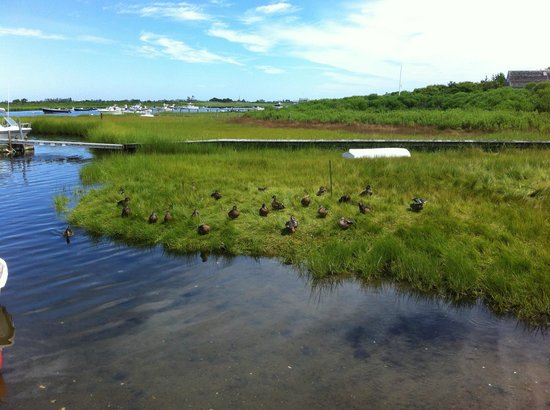The Chapman House: Bahia con patos en Nantucket