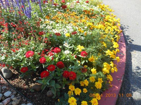 Hotel Elegante Conference & Event Center: Flowers everywhere!