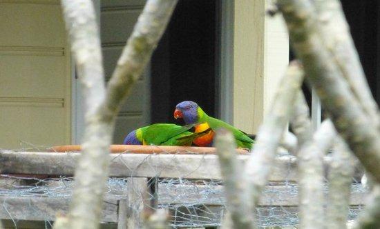 Roseville House: Many birds visit