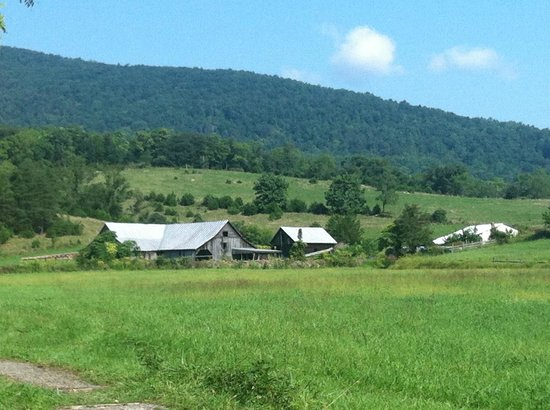 Lydia Mountain Cabins: Nearby farm