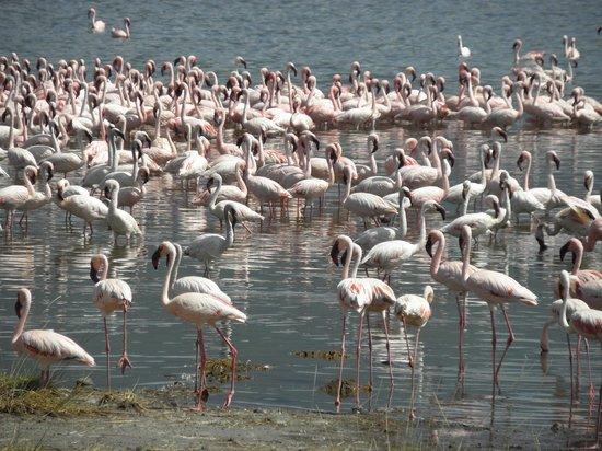 Lake Bogoria : The Pink Carpet