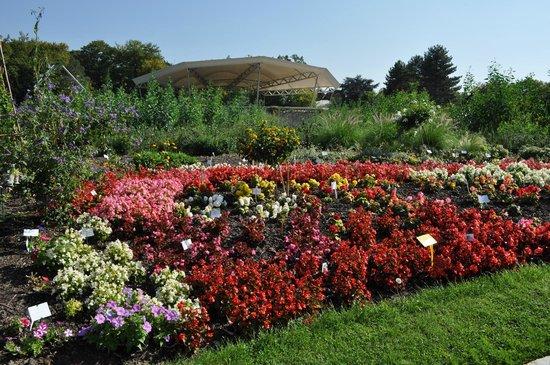 Paris Trip Tours : แปลงดอกไม้ต่างๆด้านหน้าสวน