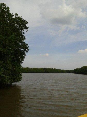 Pichavaram Mangrove Forest: Pitachvarm backwaters