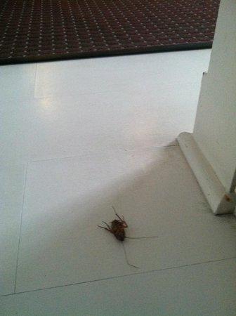 Clinton Hotel South Beach: The bugs