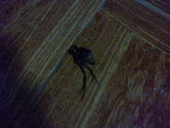 Datofarm : dead spider