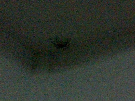 Datofarm : spider