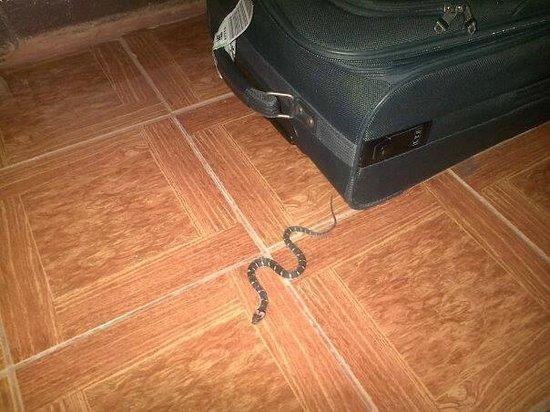 Datofarm : snake