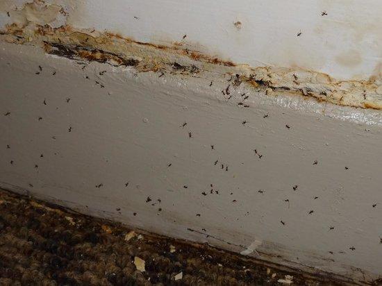Hotel Flowers: 蟻が大量にいました