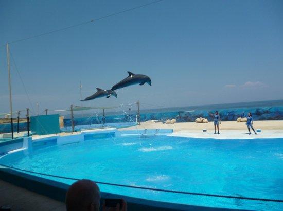 Bahar ic-Caghaq, Malta: spettacolo