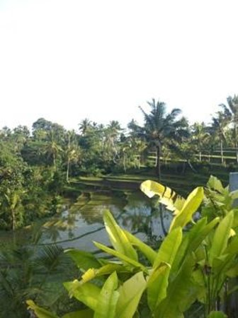Serenity Ubud Villas: vue de la piscine
