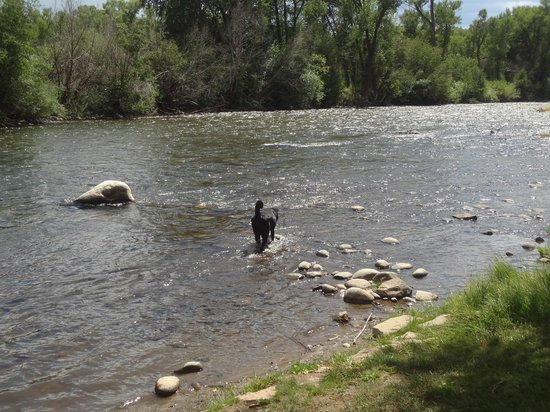 Rockey River Resort: The river where your dog can play.