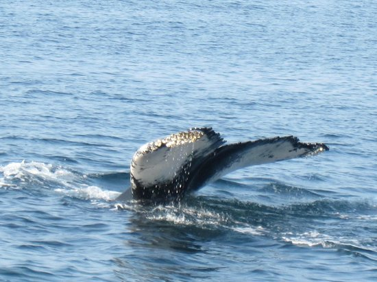 Capt Bill & Sons Whale Watch: At the tale end of the trip