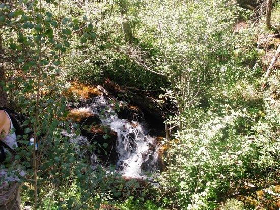 Cimarron Canyon State Park: Clear Creek Trail, Cimarron State Park