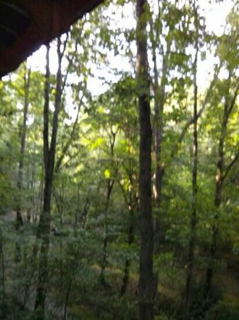 Cavender Creek Cabins Resort: View from deck of Cabin 5