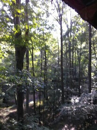 Cavender Creek Cabins Resort: Lots of shade from the trees make being on the back deck at anytime of day enjoyable!