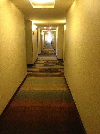 Hilton Garden Inn Beaumont : wide hallway to the rooms