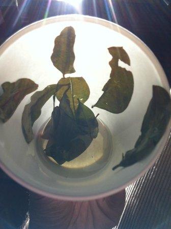 Tambo del Inka, a Luxury Collection Resort & Spa : mate de coca leaves ...