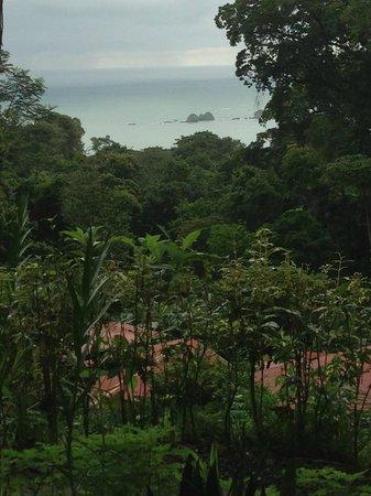 Mar y Selva Ecolodge: Vistas maravillosas