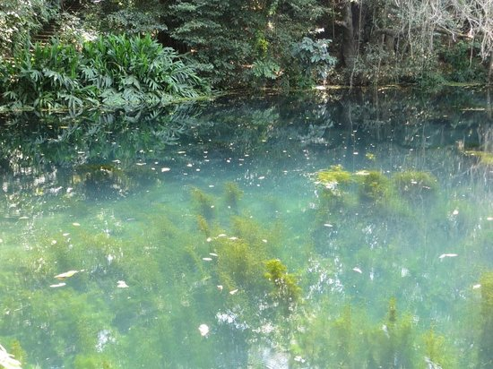 Ngare Sero Mountain Lodge: magical underwater forest