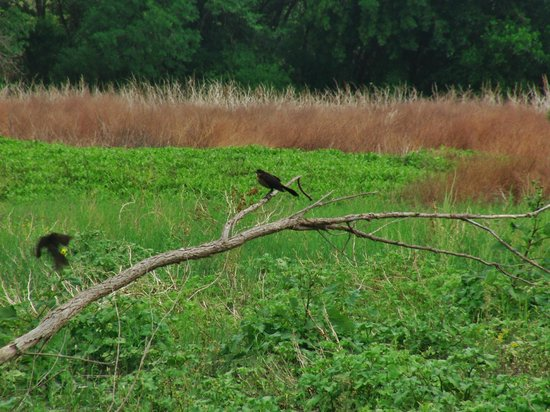 I-20 Wildlife Preserve: A bird in the marsh
