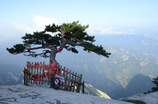 Mount Huashan: lone tree