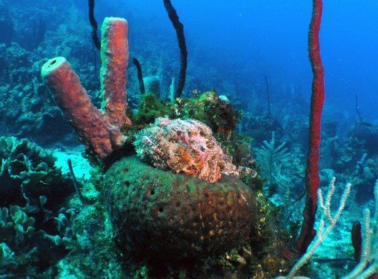 Infinity Bay Spa and Beach Resort: scorpionfish