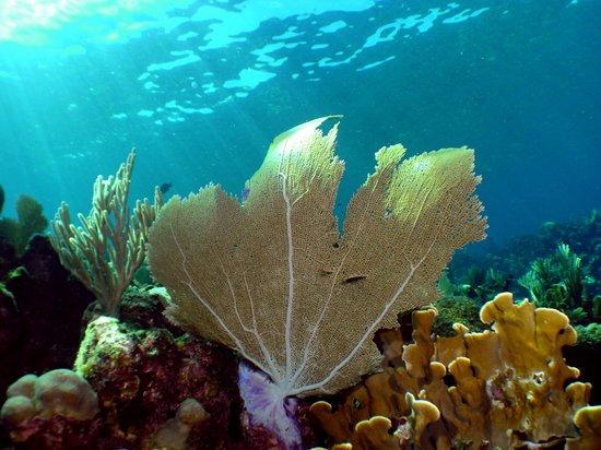 Infinity Bay Spa and Beach Resort: Sea Fan
