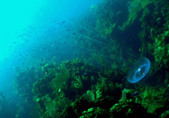 Infinity Bay Spa and Beach Resort: small jellyfish