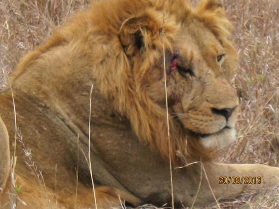 Shindzela Tented Safari Camp: 1 of the Big 5