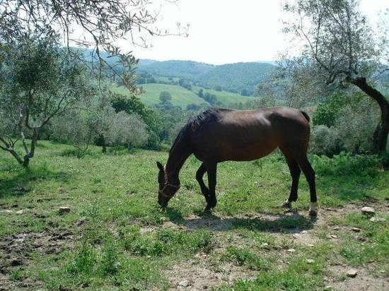 Fattoria Biologica Poggio Foco: one of the horses on the property