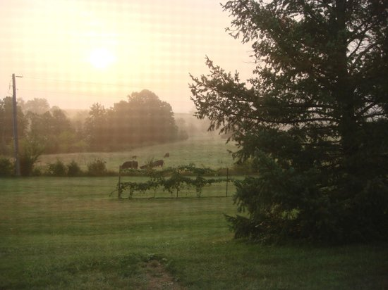 The View Motel : Early morning cows come to visit.