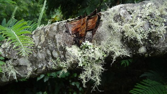 Andes EcoTours: Litchens