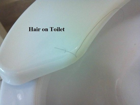 Quality Inn near Seaworld: Hair on Toilet