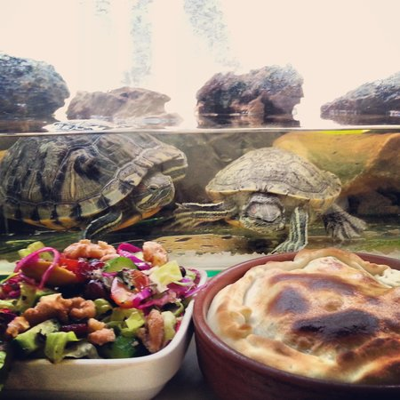 Turtle Green Tea Bar : Turtles craving our pies