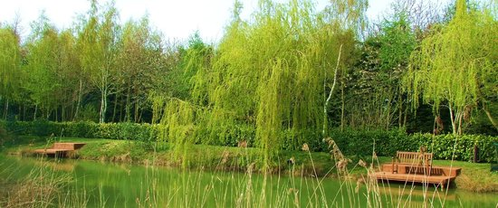 Villa Farm Bed and Breakfast: The pond for a spot of fishing or just enjoying the view