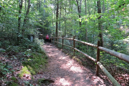 Burgess Falls: path along the way
