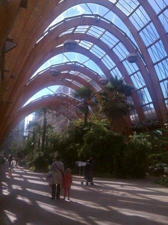 Inside Sheffield Winter Gardens