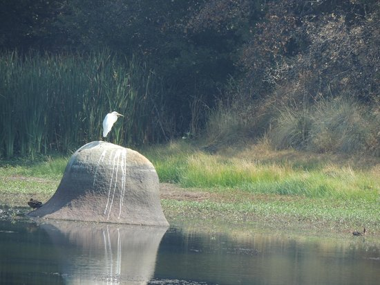 Deaver Vineyards Winery : Visiting Egret