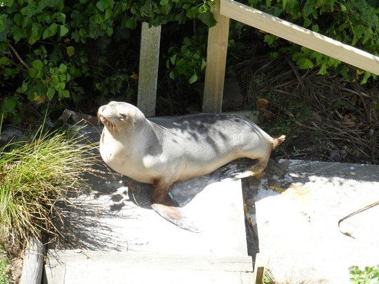 Mike & Jennys Kaka Point Accommodation: Seal coming up to visit
