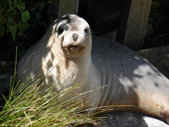 Mike & Jennys Kaka Point Accommodation: seal sunning itself on steps