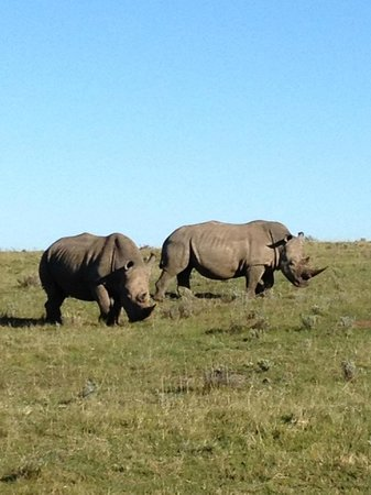 Schotia Safaris Private Game Reserve: adorable, these giants!